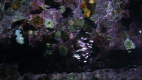 Abstract kleurrijk koraal onder oppervlakte stock videobeelden