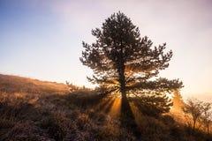 Abstract kleurrijk ochtend heuvelig landschap Stock Afbeeldingen