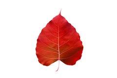 Abstract kleurrijk rood die blad, op witte achtergrond wordt geïsoleerd Royalty-vrije Stock Fotografie
