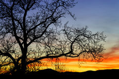 Abstract kleurrijk zonsonderganglandschap met boomsilhouet Royalty-vrije Stock Fotografie