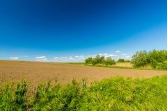 Abstract landelijk landschap in de lente, met oneindige horizon, heldere kleuren, langs natuurlijk meer met rietinstallaties Royalty-vrije Stock Fotografie