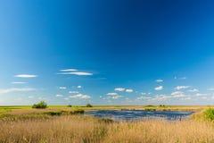 Abstract landelijk landschap in de lente, met oneindige horizon, heldere kleuren, langs natuurlijk meer met rietinstallaties Stock Fotografie