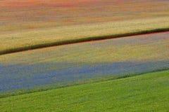 Flowering castelluccio 2. Abstract landscape of the flowering castelluccio stock photo