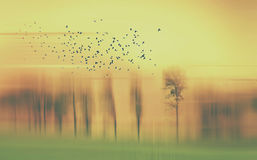 Abstract landscape with trees and birds in yellow and green and orange Royalty Free Stock Images