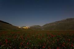 Het bloeien castelluccio 1 Royalty-vrije Stock Foto's