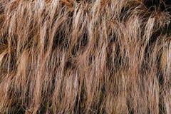 abstract lang droog gras Stock Foto