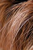 abstract lang droog gras Royalty-vrije Stock Foto