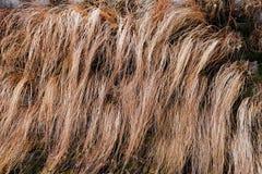 abstract lang droog gras Royalty-vrije Stock Afbeeldingen