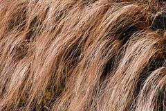 abstract lang droog gras Stock Afbeeldingen