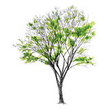 Large bare tree without leaves - hand drawn Royalty Free Stock Image