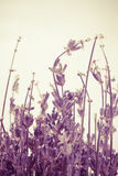 Abstract lavender Royalty Free Stock Photography