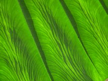 Abstract leaf Royalty Free Stock Photos