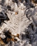 Abstract leaf. Hoarfrost close up in winter Royalty Free Stock Image