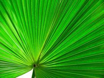 Abstract leaf. A leaf shot at close magnification, abstract background Stock Images