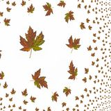 Abstract Leaf background Royalty Free Stock Photography
