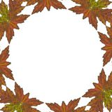 Abstract Leaf background Royalty Free Stock Photos
