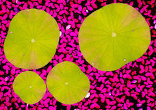 abstract leaf background Royalty Free Stock Image