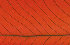 Abstract leaf Royalty Free Stock Images