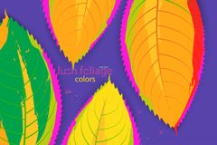 Abstract leaf colors scene vector Royalty Free Stock Image