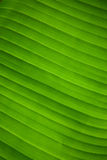 Abstract leaf design. Showing the waves and curves of the leaf Stock Photo