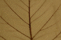 Abstract leaf macro shot Stock Photo