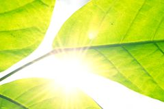 Abstract leaf nature with sunshine flare royalty free stock photos