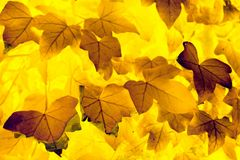 Abstract leaf pattern Stock Images