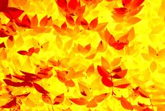 Abstract leaf pattern. Gold, yellow and red abstract leaf pattern with an autumnal feel royalty free stock photo