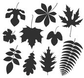 Abstract Leaf. Silhouette. Vector illustration EPS Stock Image