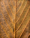Abstract leaf texture royalty free stock image