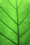 Abstract Leaf Texture Background Royalty Free Stock Image