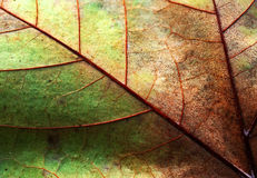 Abstract leaf texture Stock Photography