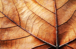Abstract leaf texture Royalty Free Stock Photos