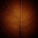 Abstract leaf vein texture Royalty Free Stock Images