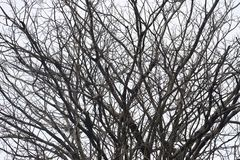 Abstract leafless tree branches Royalty Free Stock Images