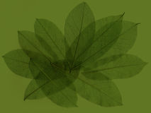Abstract leaves 4 Stock Photos