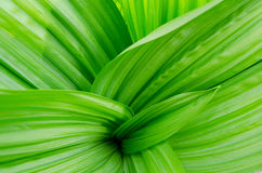 Abstract leaves background Royalty Free Stock Photo