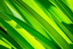 Abstract leaves Royalty Free Stock Photo
