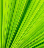 Abstract leaves. Abstract image of fresh Green Palm leaves Stock Photo