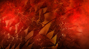 Abstract Leaves Nature Background royalty free stock photo