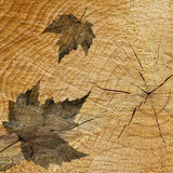Abstract Leaves on wood background Stock Image