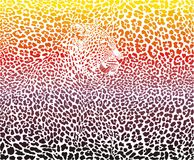 Abstract leopard skin and head Stock Images