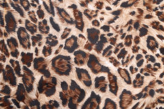 Abstract with leopard texture Stock Images