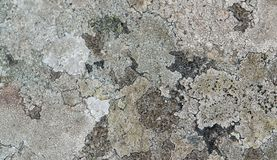 Abstract lichen detail Royalty Free Stock Image