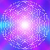 Life flower mandala stock image