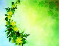 Abstract light background with leafs Royalty Free Stock Photo