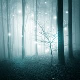 Abstract light in forest. Abstract bokeh lights in the fairy tale foggy forest Royalty Free Stock Photo