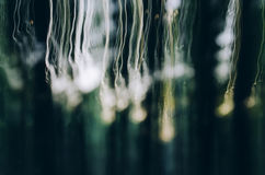 Abstract light lines in nature Stock Photography