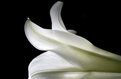 Abstract Lily Shapes. Macro image of the petal shapes of a easter lily Royalty Free Stock Photo