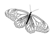Abstract  line art butterfly in black and white. Royalty Free Stock Images